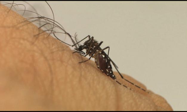 Saúde de Louveira faz alerta para cuidados com chikungunya em meio à pandemia da covid-19