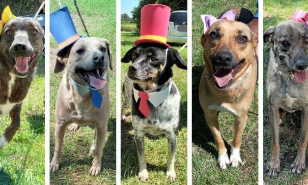 Cinco cachorros precisam de lar e aguardam adoção na Zoonoses de Louveira