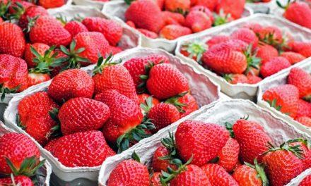 Louveira está com inscrições abertas para curso de cultivo de morangos orgânicos