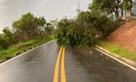 Estrada das Rainhas fica intransitável após árvore e poste caírem