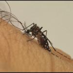 Covid-19: Quem teve dengue tem mais chances de ter sintomas?