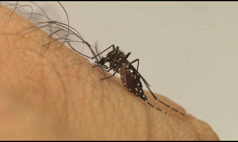 Proteína que ajuda o vírus zika a entrar na célula pode ser alvo para novos antivirais