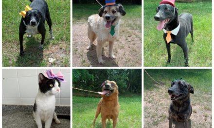 Zoonoses tem cinco cachorros e um gato esperando por adoção em Louveira