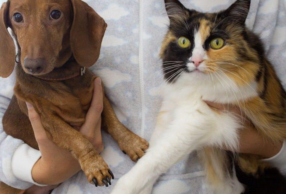 Cuidados com os pets: vacinação contra raiva deve estar em dia, alerta zoonoses