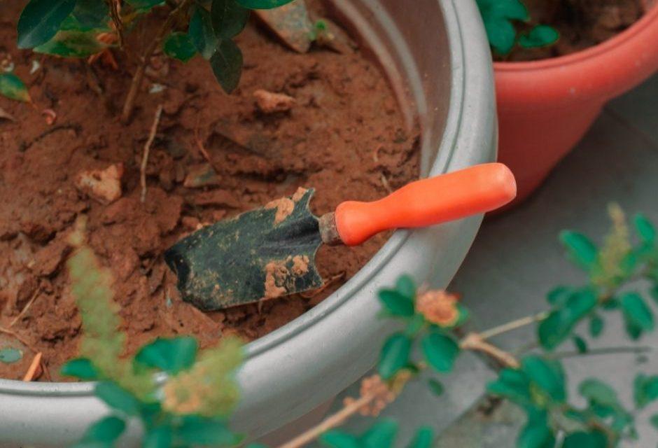 Curso gratuito e presencial de formação de Jardineiro está com inscrições abertas em Louveira