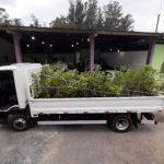 Louveira recebeu 1,5 mil mudas nativas doadas pelo Consórcio PCJ para reflorestamento de áreas de preservação
